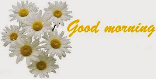 Good morning and daisy flower