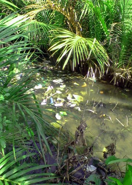 pencemaran sungai 3