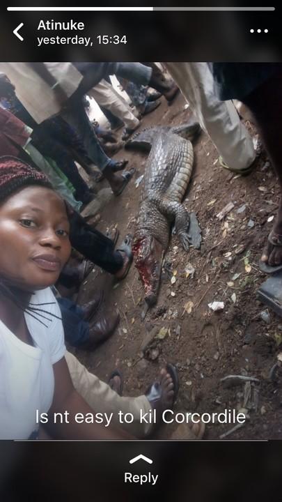 Photos: Crocodile Killed In Bodija, Ibadan