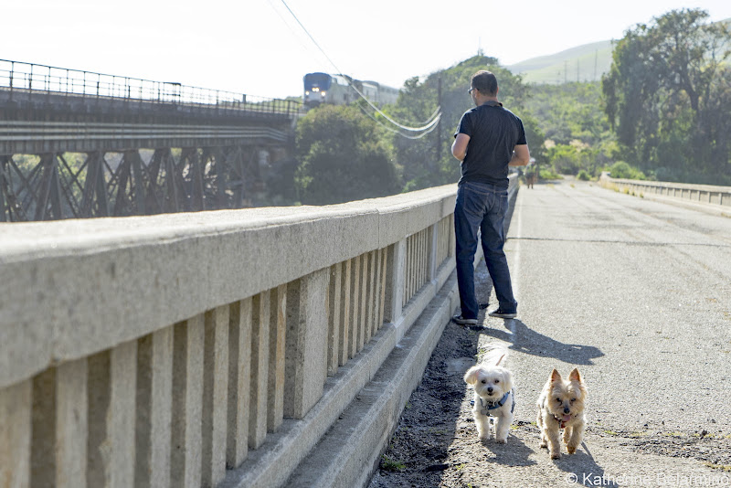 Henry and Charlie on Bridge at Arroyo Hondo Vista Point Pet-Friendly Vacations Tips for Traveling with Dogs