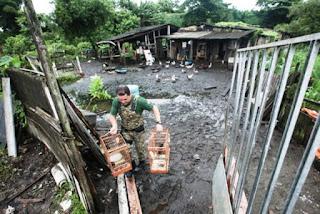 Criação ilegal de animais é desmantelada pela Guarda Civil da Praia Grande, SP