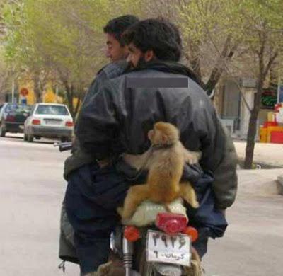gambar lucu gratis monyet