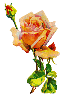 rose flower image botanical illustration