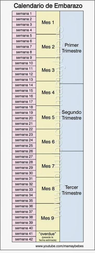 Calendario De Embarazo Semanas Y Meses.Mi Bebita Y Yo Semana 22 Del Embarazo