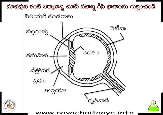 10th Class Physical Science Diagrams: మానవుని కంటి