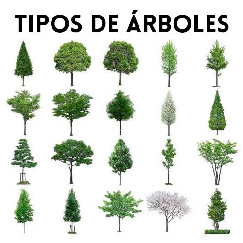 Tipos de rboles temas ambientales ecol gicos y for Diferencia entre arboles de hoja caduca y hoja perenne