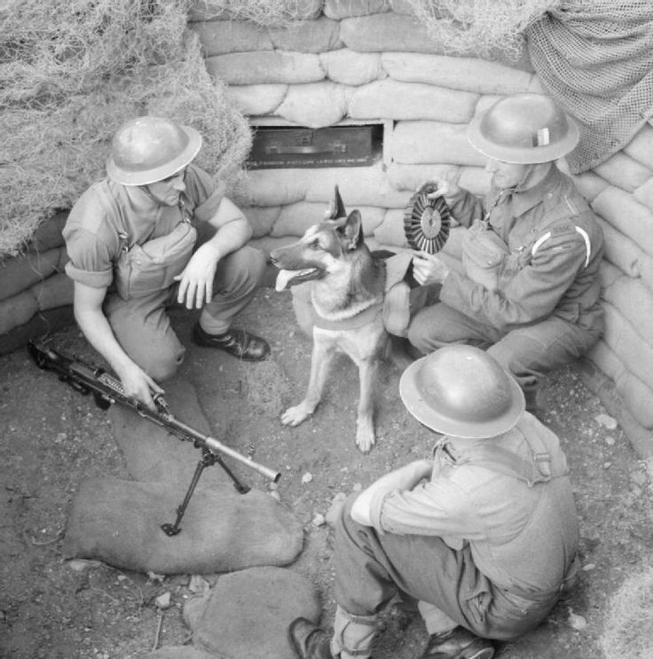 dogs World War II worldwartwo.filminspector.com