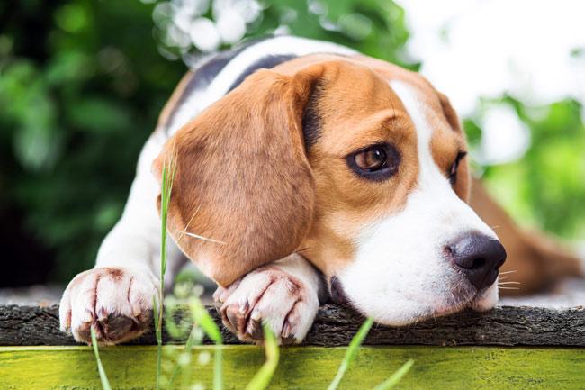 Zaburzenia jelitowe u psa