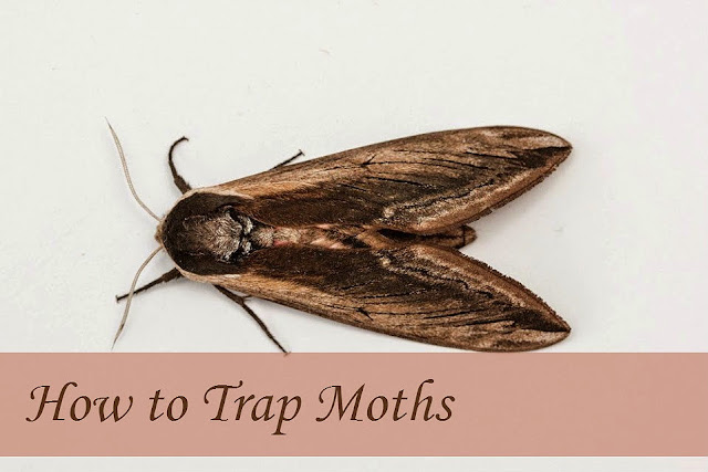 How to Trap Moths