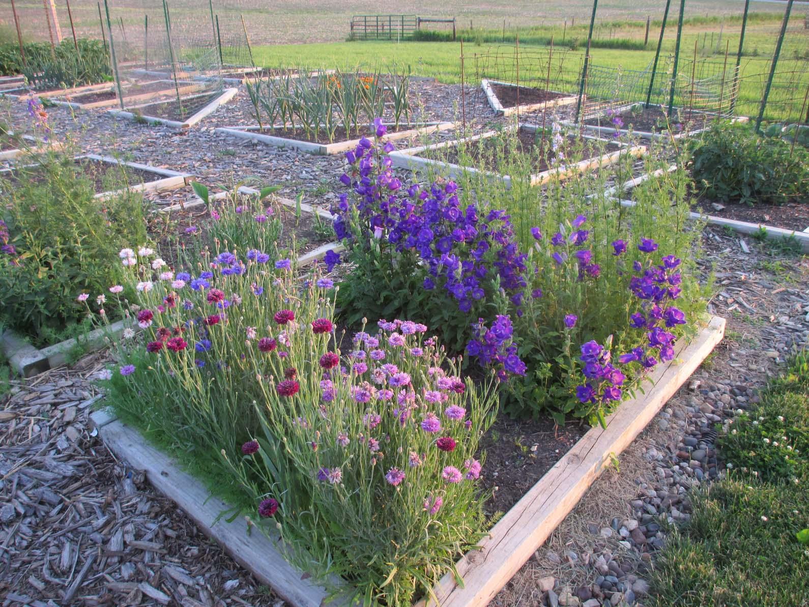 Garden Fancy June Flowers