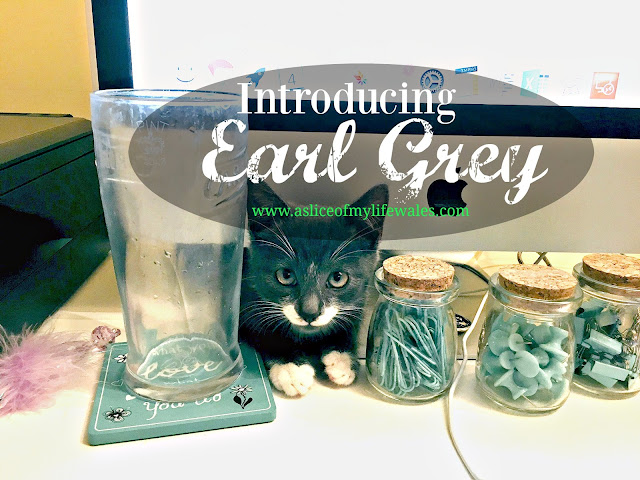 Introducing Earl Grey - a blog post introducing our new rescue kitten from Blue Cross. Grey kitten with a white moustache and white paws.