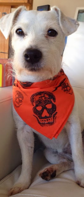 orange and black halloween bandana for dogs