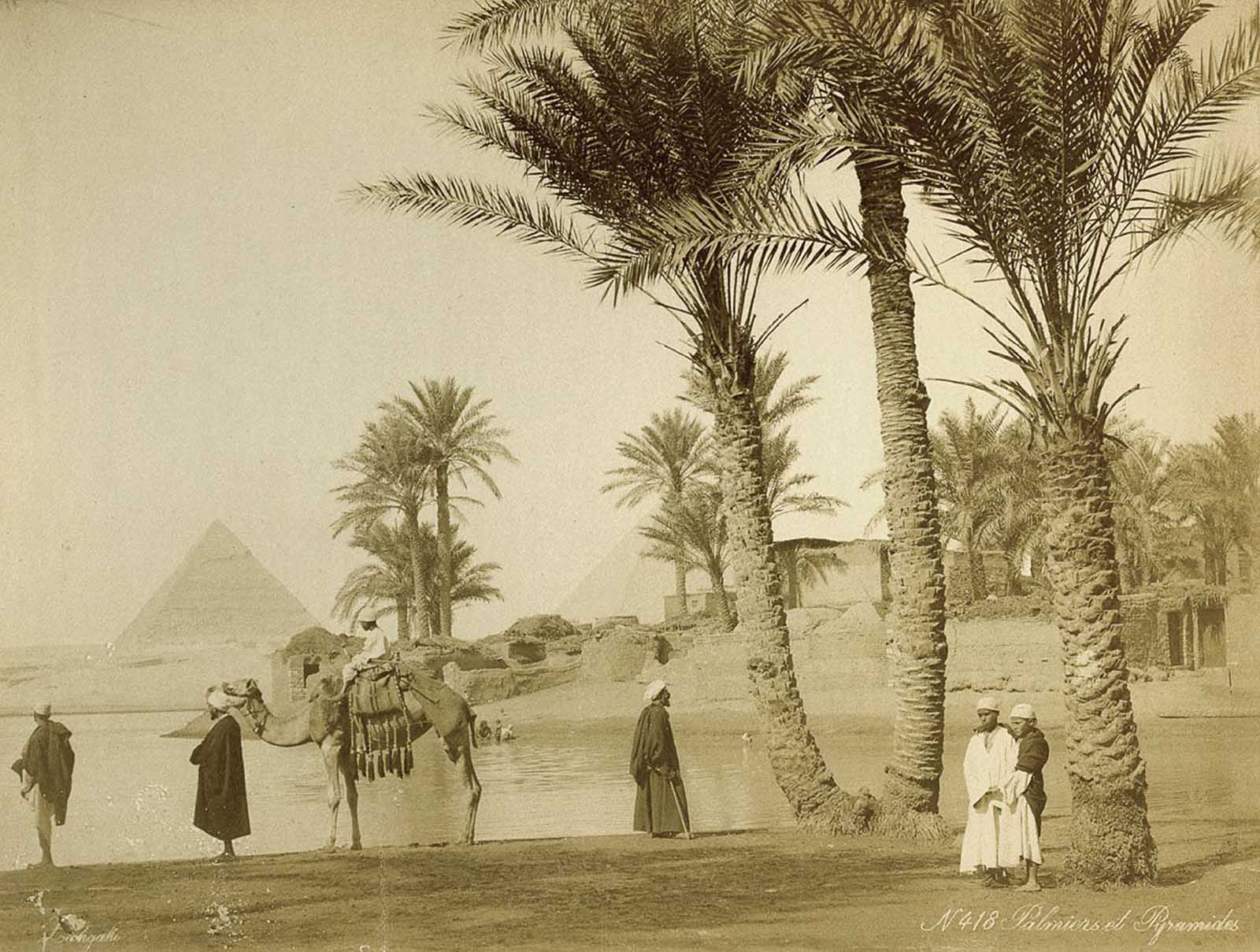 Palmeral cerca de las pirámides.