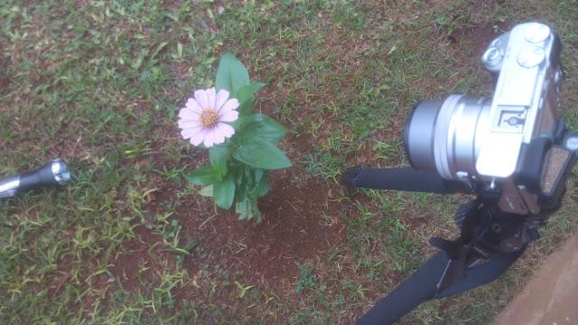 Kondisi pemotretan saat membuat foto bokeh menggunakan lensa kit