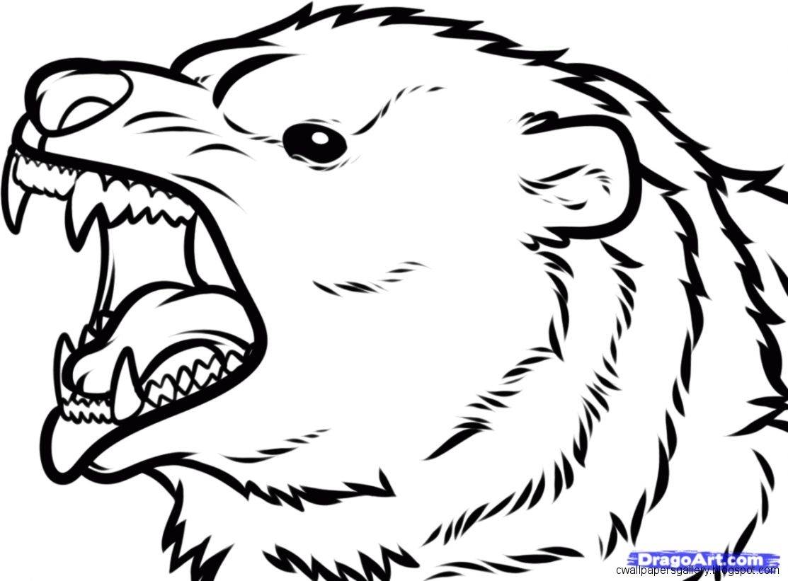 Bear Face Drawing   Wallpapers Gallery