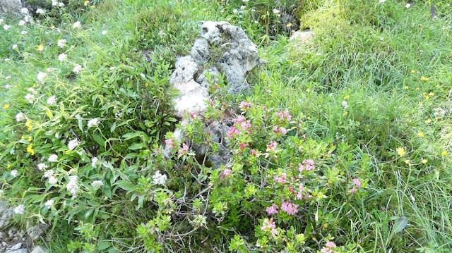Rosengarten, Dolomiten