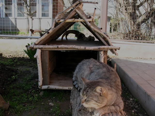 Кошка Матута