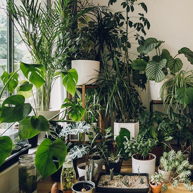 These best and easiest indoor houseplants