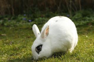 makanan kelinci yang sehat