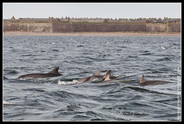 Delfines Chanorny Point (Escocia)
