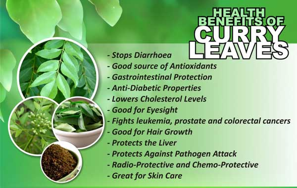 studies on dehydration of curry leaves Acute toxicity study of murraya koenigii wwwijpsiorg 35 | p a g e behavioral assessment: the acute toxicity effect of mcr and mme of curry leaves.