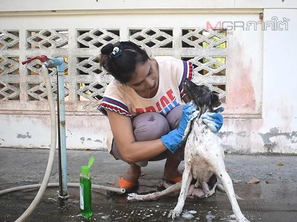 สาวหนองบ่อใช้เวลาว่างอาบน้ำให้สุนัขตามวัด เผยทำแล้วสบายใจ