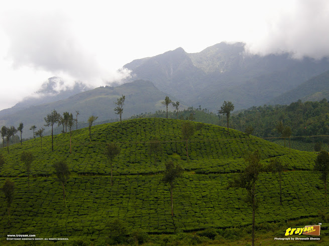 Wayanad – A serene hill station in Western Ghats, Kerala