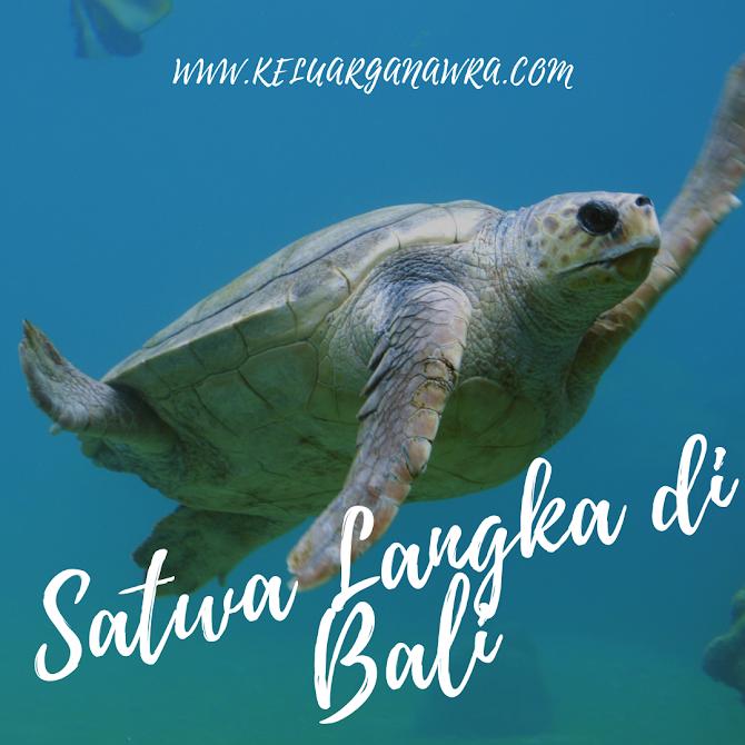 Dekat Dengan Alam dan Satwa Langka di Pulau Penyu Bali