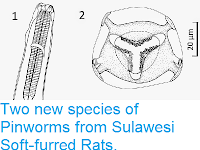 https://sciencythoughts.blogspot.com/2014/12/two-new-species-of-pinworms-from.html