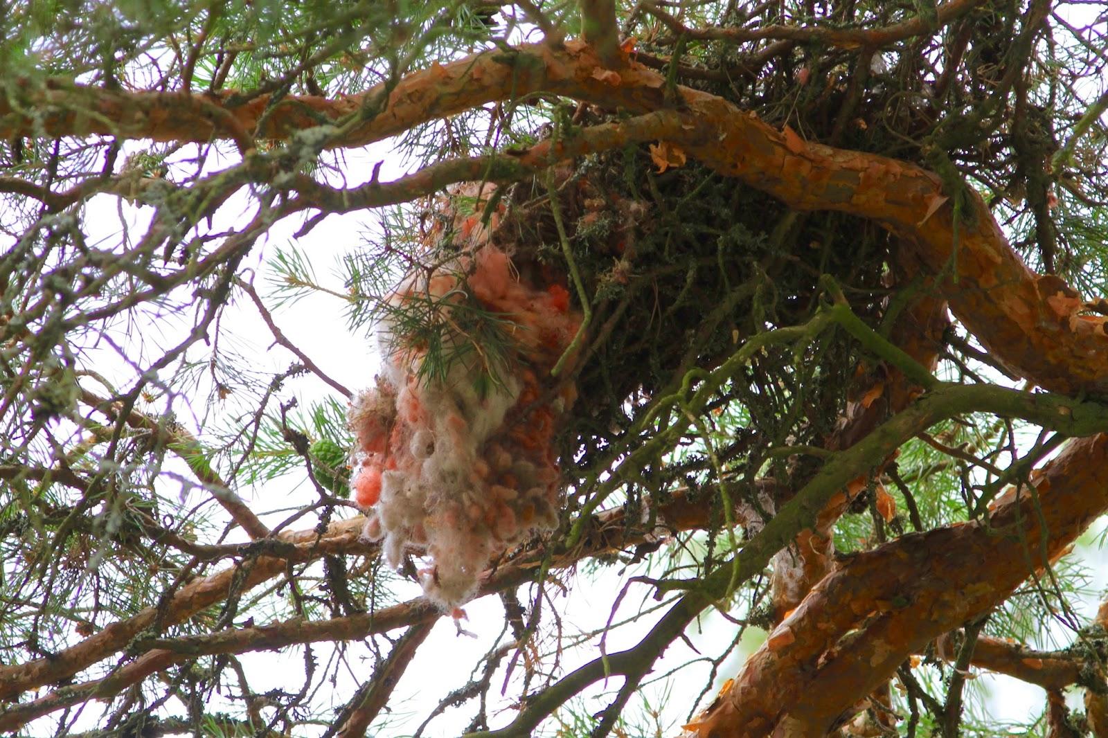 Oravan Pesä