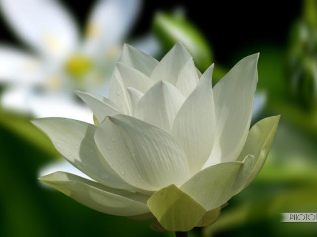 99+ Status & Lời Phật dạy về cuộc sống ý nghĩa giúp tâm thanh tịnh