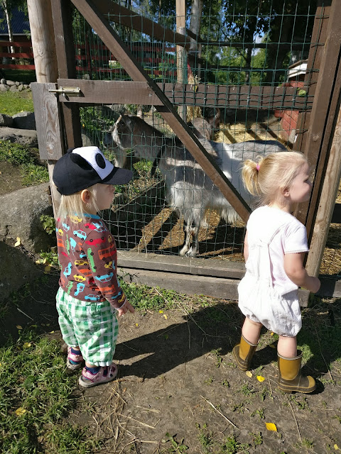 eläinten vanhainkoti