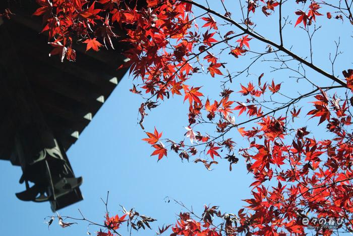Momiji rouges sur fond de ciel bleu, temple Daisho-in, Miyajima, Hiroshima-ken