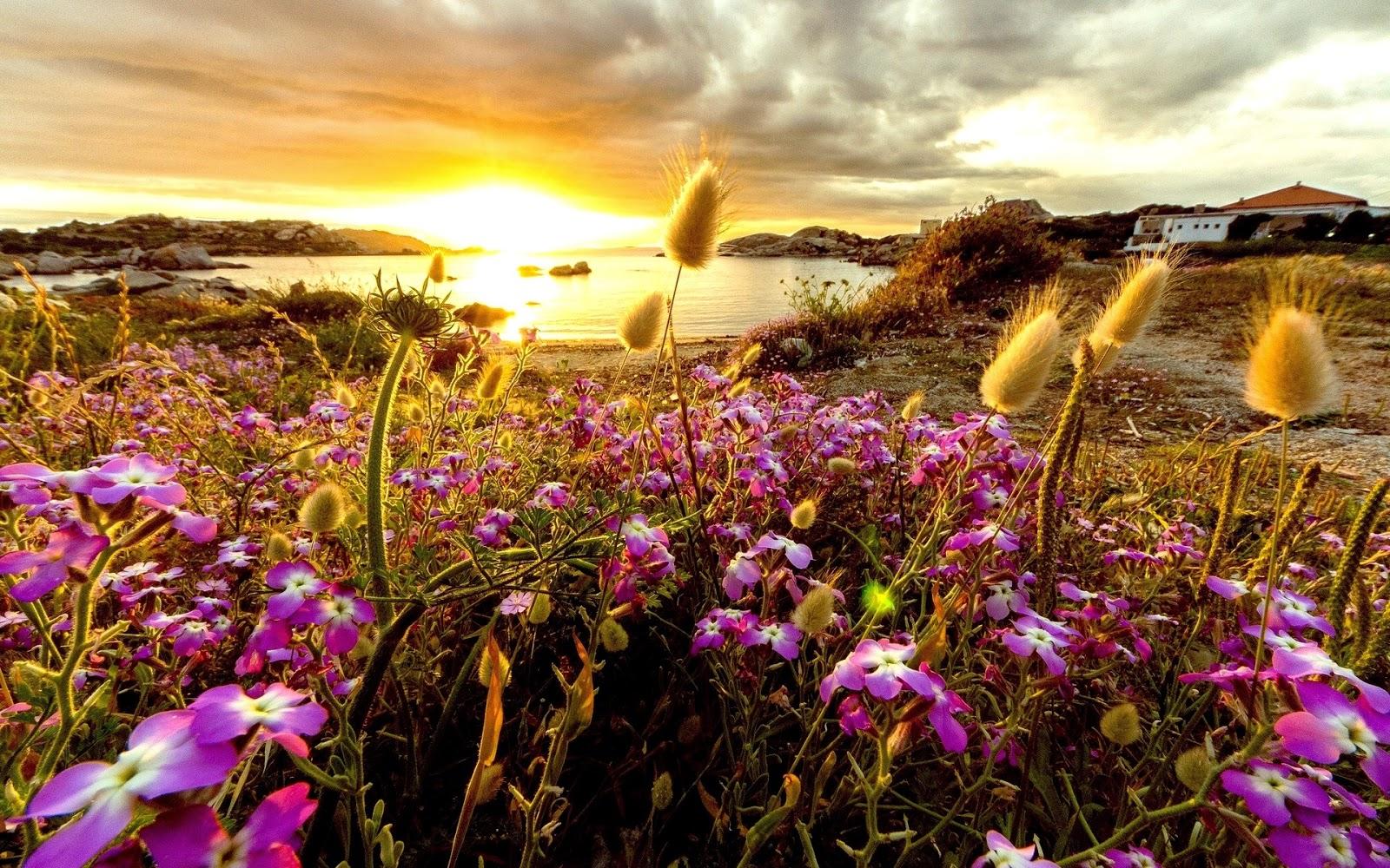 Paarse bloemen bij zonsondergang