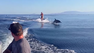 Dolphins swims near the woman and guided her through her trip.