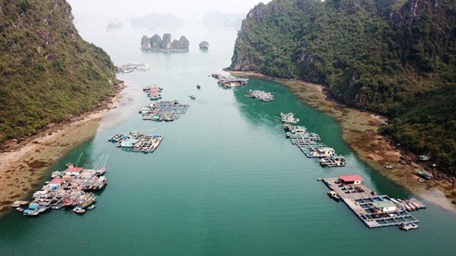 Chiêm ngưỡng làng chài đẹp nhất thế giới trên vịnh Hạ Long -1