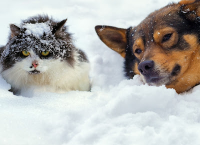 http://www.petmd.com/dog/parasites/do-fleas-survive-winter