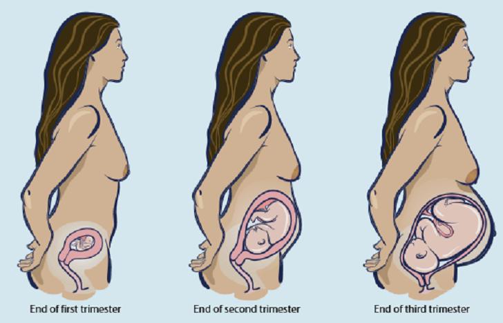 Pregnancy - cover