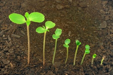النمو عند  النبات و التنوع