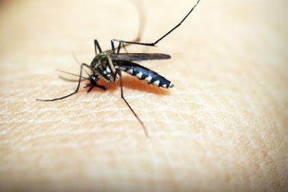 Cara Mengusir Nyamuk dengan Bahan-Bahan Alami yang ada Disekitar Kita