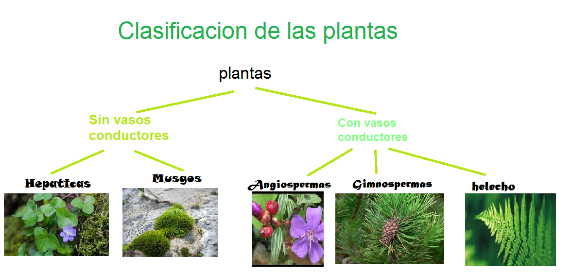 Los seres vivos for Clasificacion de las plantas ornamentales
