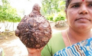 Cooking Yam Curry Recipe Preperd By Mummy in My Village