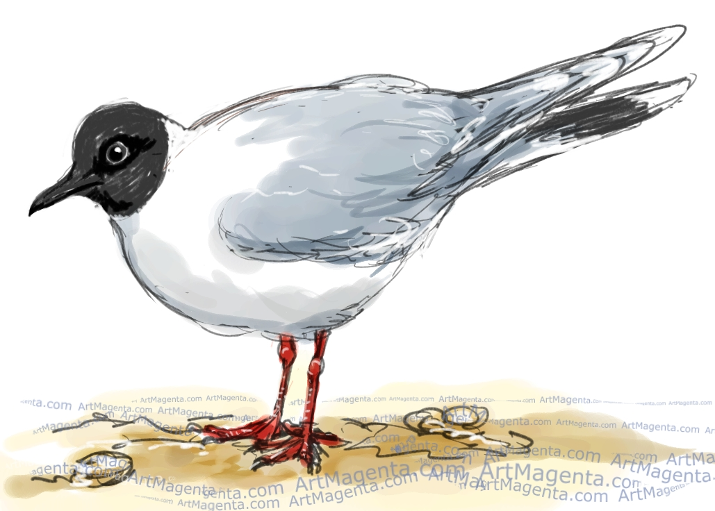 Little Gull sketch painting. Bird art drawing by illustrator Artmagenta