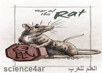 الفأر المعدني برج افأر الصيني