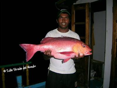 pesce gigante