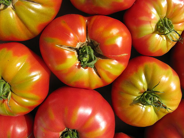 How To Grow Outdoor Tomato Plants From Seed The Garden Of