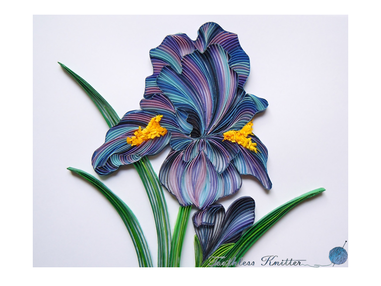Quilled Iris / Quillingowy Irys