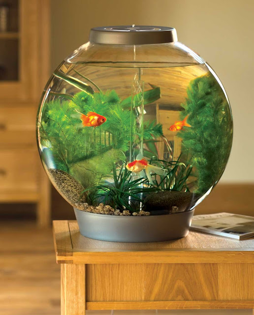artistic fish tank ideas