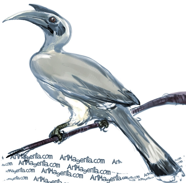 Indian Grey Hornbill sketch painting. Bird art drawing by illustrator Artmagenta