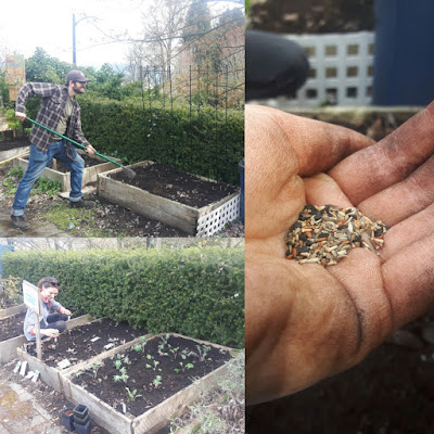 Greg digging, Kate planting - and some beautiful mesclun mix in a gardener's hand
